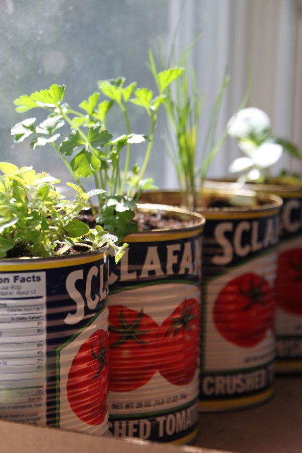 Plant a Pizza Garden. Create delicious homemade pizzas with fresh grown herbs and tomatoes from a kitchen windowsill container garden.