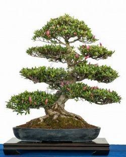 #GIARDINAGGIO COSTO BONSAI  Ulteriori informazioni su: costo bonsai - giardinaggio - Tecniche di giardinaggio http://www.giardinaggio.it/giardinaggio/tecniche-di-giardinaggio/costo-bonsai.asp#ixzz3NOwSHBhN
