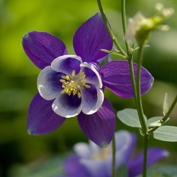 Flower Garden Ideas Colorado 34 best wildflowers images on pinterest   shade garden, flower