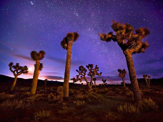Death Valley National Park, California-want to go star gazing among the Joshua trees. Can't see the constellations anymore where we live. Loved to lay outside in the summer staring up as a kid!