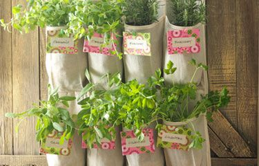 """Vertical herb garden in a """"recycled"""" shoe caddy. Might have to try something similar!"""
