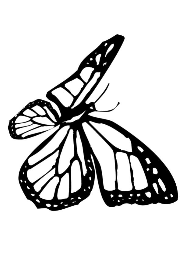 Monarch Butterfly Coloring Sheet