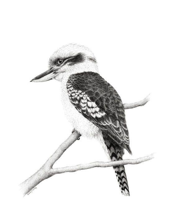 FINE ART PRINT // Kookaburra // Open Edition // Artwork //