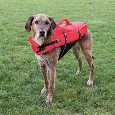 Eine Schwimmweste für euren Liebsten, damit auch der Hund Spaß am Schwimmen haben kann.