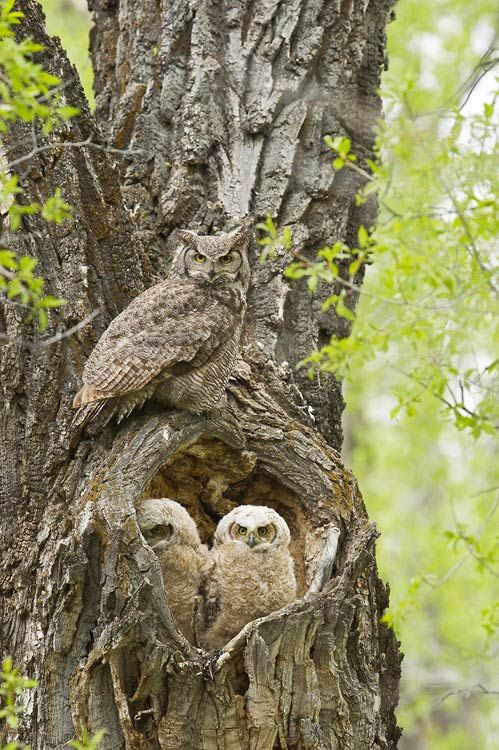 My Fotolog: owls