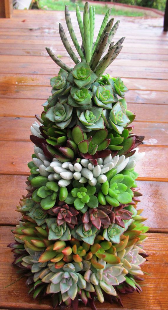 17 Best Images About Texas Cactus Christmas Trees On