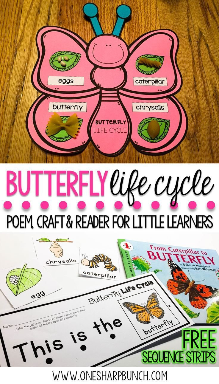 Teach your Kindergarten and primary students all about the life cycle of a butterfly with this butterfly life cycle poem, butterfly craft and FREE butterfly life cycle sequence strips!  They are the perfect way to bring a little science into your spring activities! via @onesharpbunch