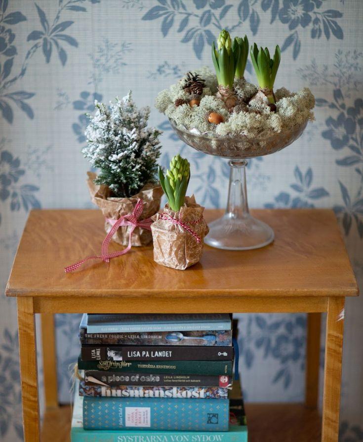 Adventsdekoration - hyacinter