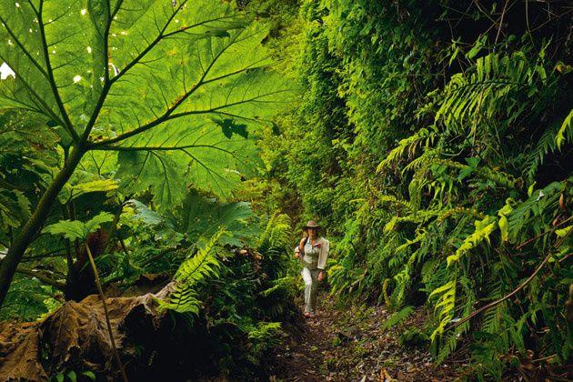 Paisajes y naturaleza única en la isla Robinson Crusoe, Chile