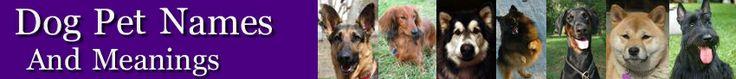 Dog Pet Names Home