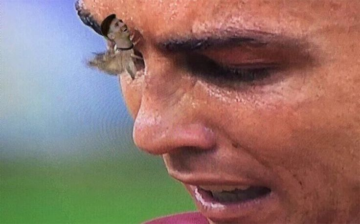 Los 'memes' de la polilla que secó las lágrimas de Cristiano Ronaldo