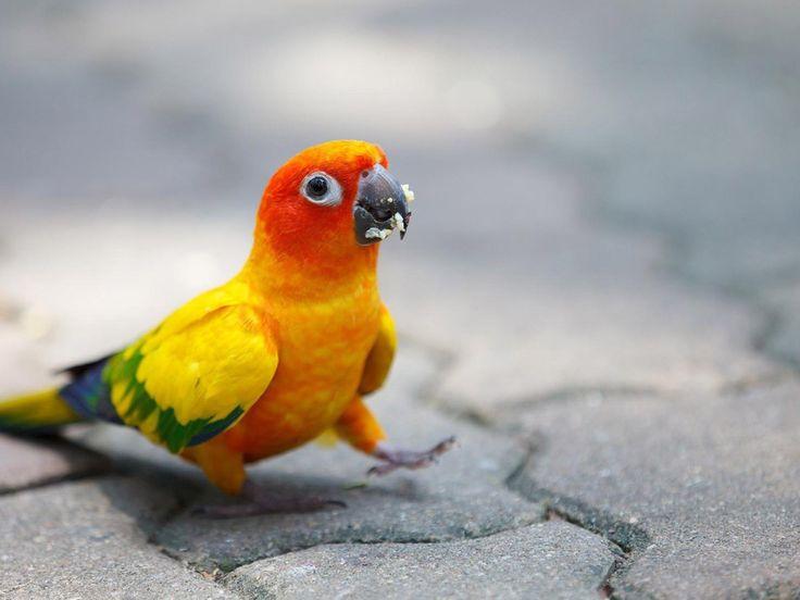 Funny Parrot Bird