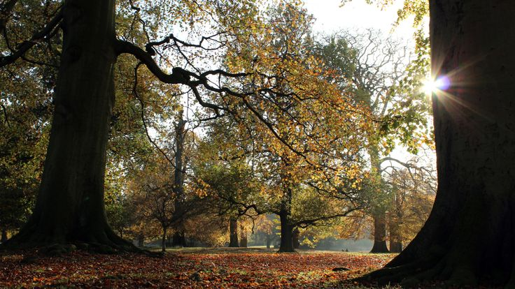 National Trust's Dunham Massey gardens ALTRINCHAM CHESHIRE. Find out more...