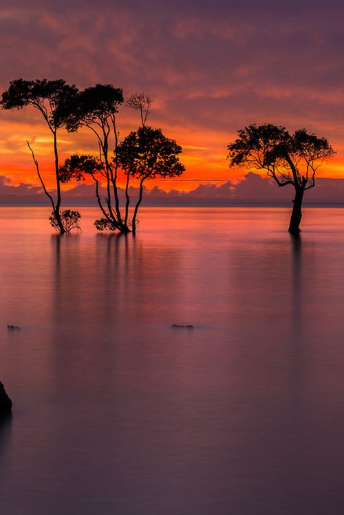 ✯ Sunrise over the Mangroves - Queensland, Australia
