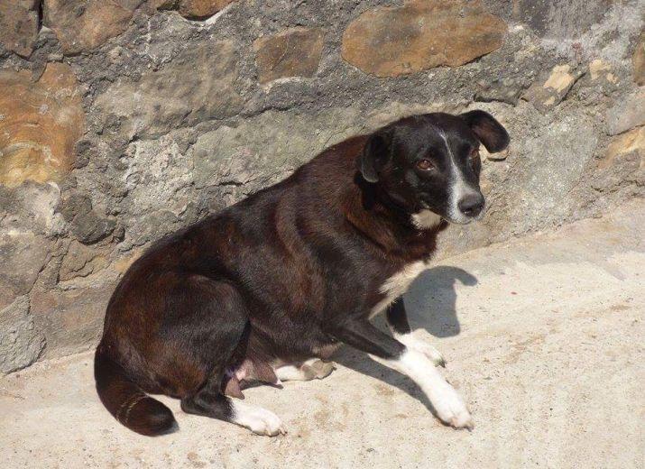 Bienvenue sur cette cagnotte !L'association WOF souhaite venir en aideaux chiens de Carmina et Florin et les protéger pour l'hiver qui arrive en les vaccinant tous!Ils sont au nombre de 20, des petits, des grands, une maman courage et ses petits chiots encore fragiles...Tous ont besoin d'être vaccinés afin de pouvoir lutter contre les maladies qui sont nombreuses en Roumanie et ensuite de pouvoir être proposésà l'adoption etrapatriés en France, Belgique ou SuissePour cela nous avons…