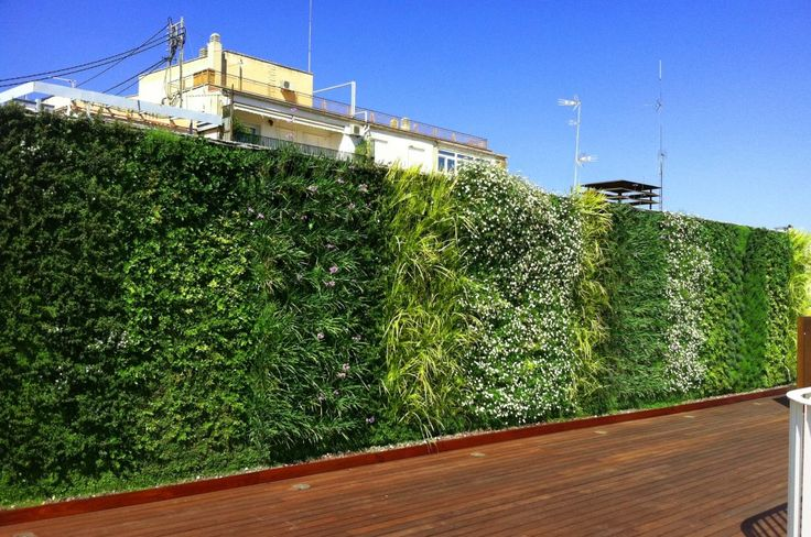 Foto5 muro vegetal finalizado de la terraza meses despu s for Paisajismo urbano