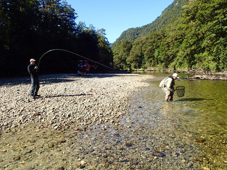 50 metres from the chopper and Joe is into his first on this remote heli adventure. www.southernriversflyfishing.co.nz
