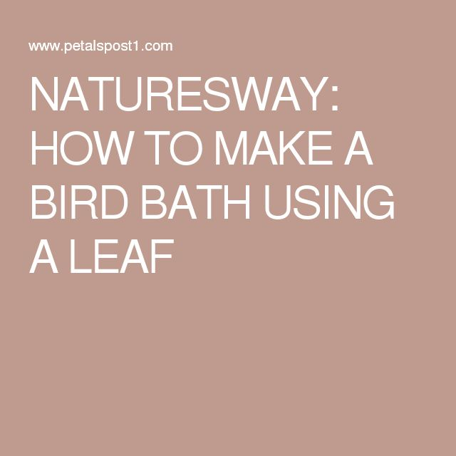 NATURESWAY: HOW TO MAKE A BIRD BATH USING A LEAF