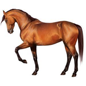 ВиктОр, Pferd Araber Rotbrauner #17973689 - Howrse