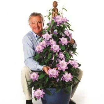 1000 images about clematis on pinterest gardens. Black Bedroom Furniture Sets. Home Design Ideas