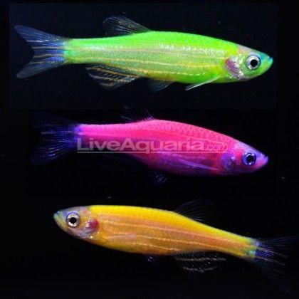 271 best basically bioluminescence images on pinterest for Swedish fish colors