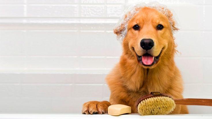 Pónlo guapo con Liverdoog. Baño Spa para tu perrito de $300 a sólo $150 | Agenda tu cita: (55) 5553-6406 | Pide tu Cuponzote: http://bit.ly/1Txem70