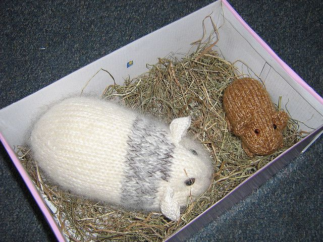 Knitting Patterns For Guinea Pig Clothes : guinea pig pattern Knitting Pinterest