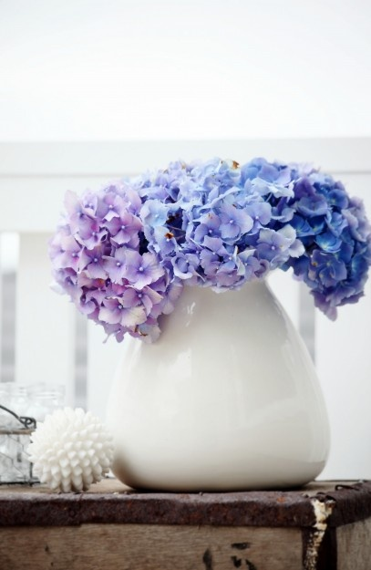 hydrangeas. Simple but beautiful