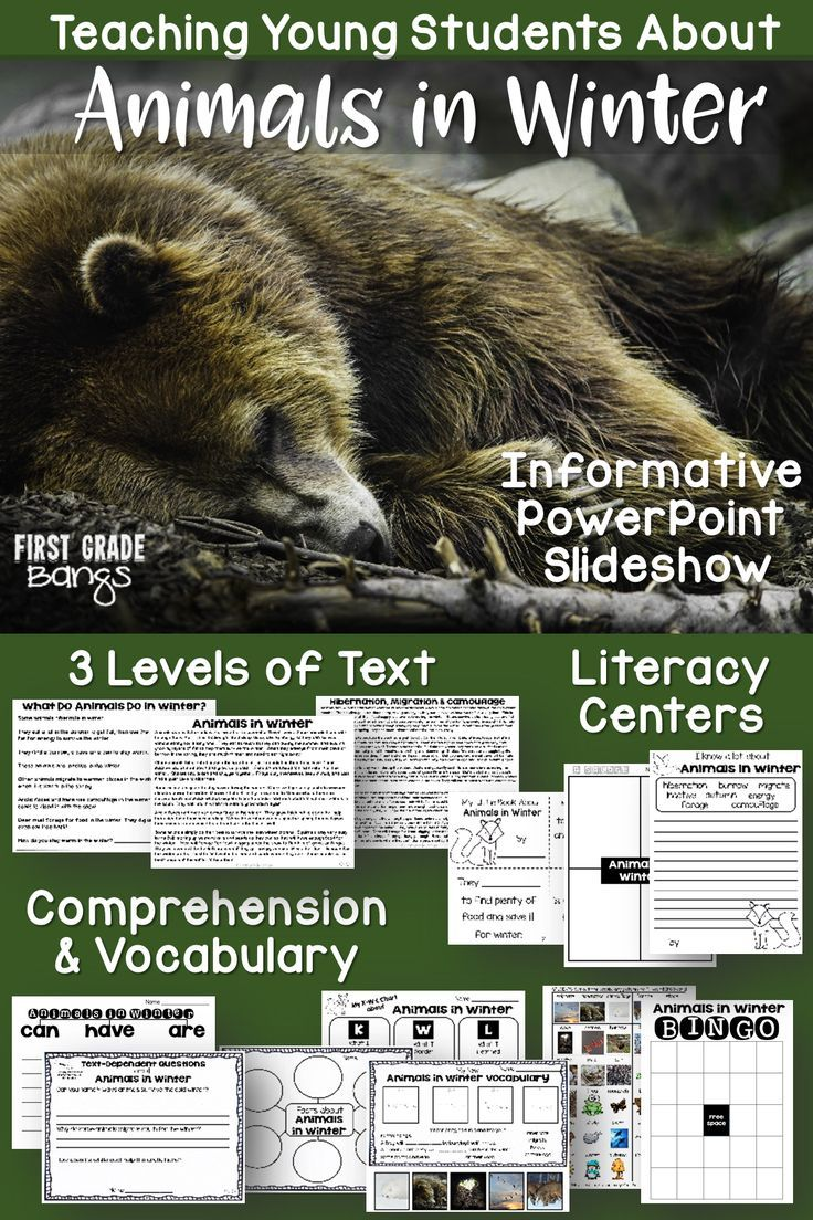 Animals In Winter Nonfiction Close Reading Visual Vocabulary Unit