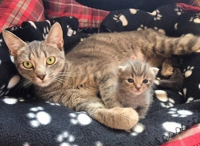 Cat Hovers Over Her Only Kitten Everywhere He Goes After She Was Rescued From The Streets Love Meow In 2020 Cat Care Cats Cat Mom
