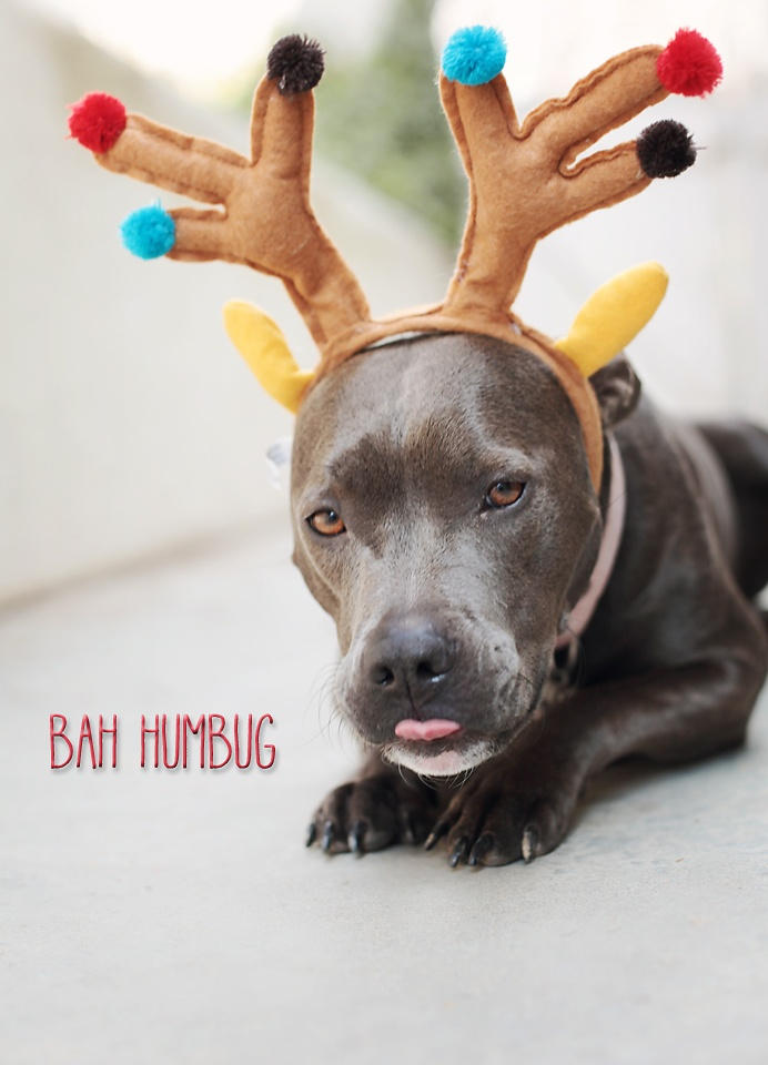 1000+ ideas about Dog Antlers on Pinterest