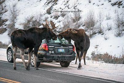 Car Wash Wyoming