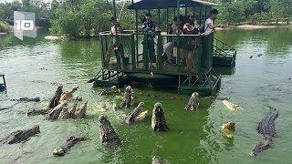 10 Atracciones turísticas con animales más peligrosas del mundo - YouTube