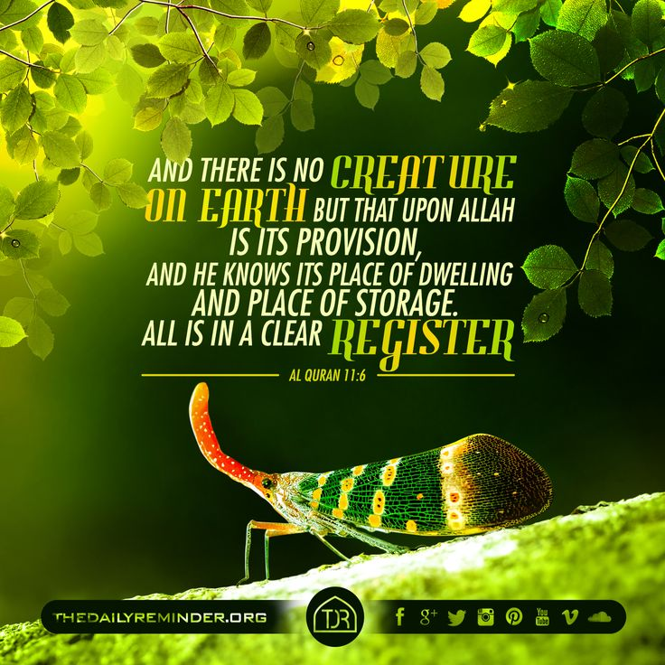 And there is no creature on earth but that upon Allah is its provision, And he knows its place of dwelling and place of storage. All is in a clear register. [11:6]