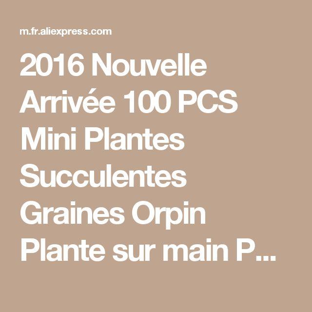 2016 Nouvelle Arrivée 100 PCS Mini Plantes Succulentes Graines Orpin Plante sur main Purification De L'air pour La Maison Facile à Cultiver Pot Livraison Gratuite de la boutique en ligne | Aliexpress mobile