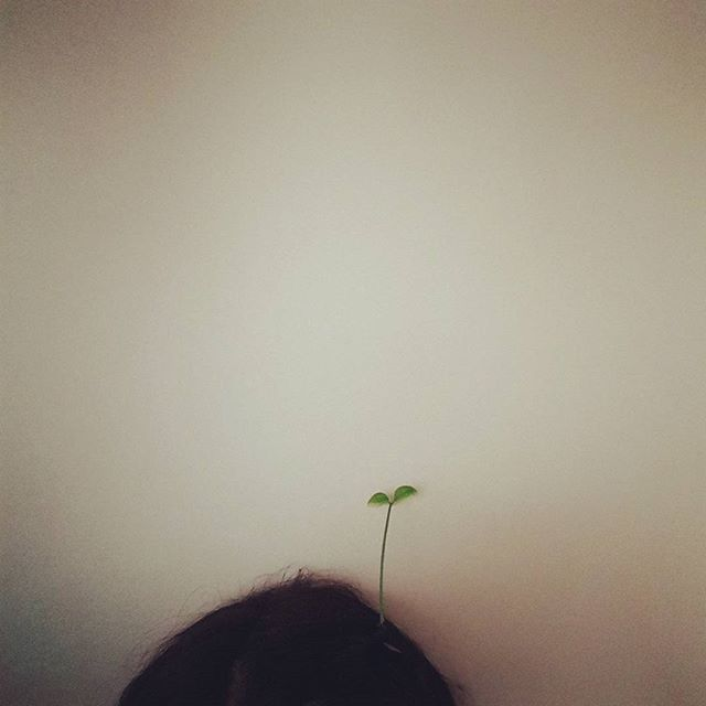 #삼일절#희망  꼬꼬마 조카가 두고간 새싹핀🌱을 머리에 꼽고 하루종일 움직였네😲 ㅎㅎㅎㅎ 근데 보니까 웃게되네요. 삼일절🇰🇷에 다시한번 희망을 품어봅니다🕯
