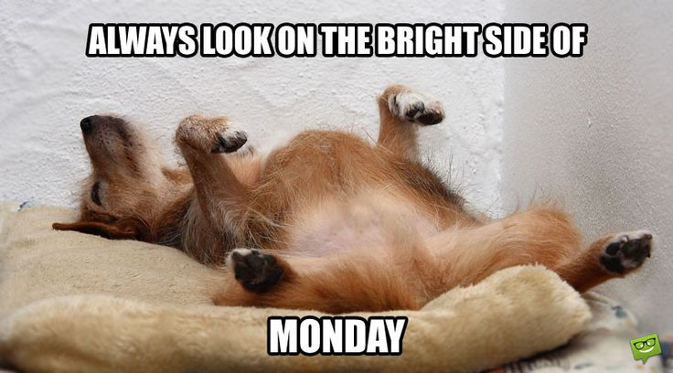 Always look on the bright side of Monday.