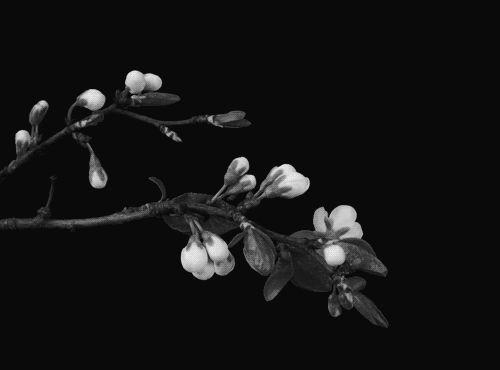 O silêncio da flor é  onde desabrocha!.. ~Sol Holme ~