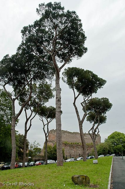 Gymnasium and conference room walls, Baths of Caracalla ...