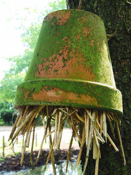 Oorwormen zijn heel nuttig. http://www.tuinieren.nl/tuinnieuws/zelf-maken/oorwormpot-maken.html