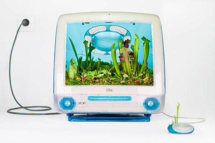 Old Apple Products Turned into Plants - Christophe Guinet // Monsieur Plant (on Fubiz)