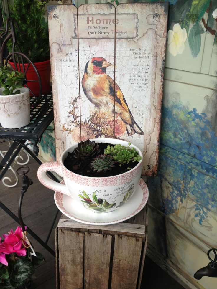 cup and saucer potted with hardy succulents