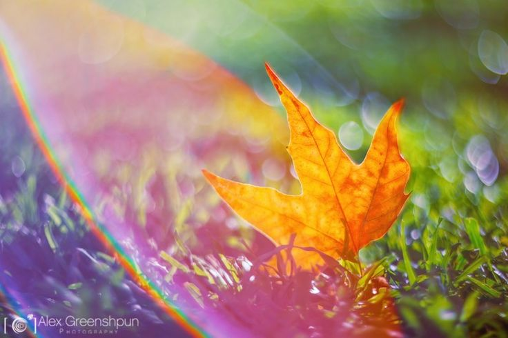 Magical Fall Captured Through the Lenses of Alex Greenshpun