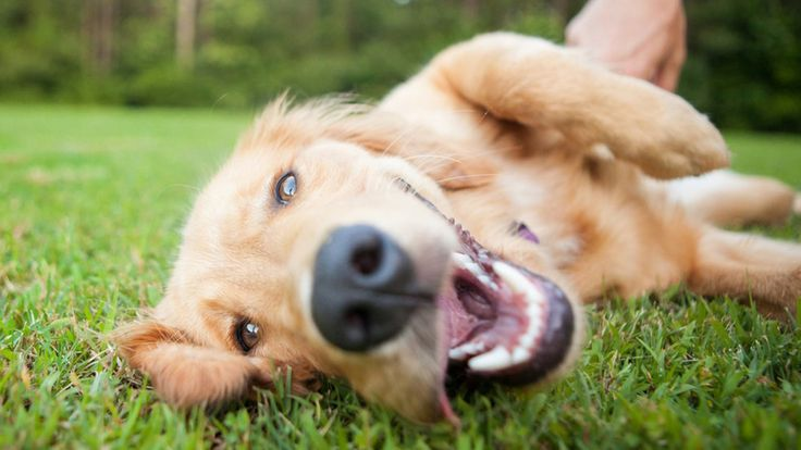 Match.com for dogs? New site finds your perfect pooch-mate