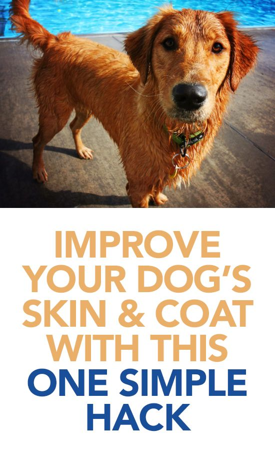 1692 best images about animals on pinterest cats for for Can i give my dog fish oil