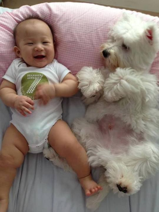 Cute idea for pet and baby pic. Plus 7mo. T-shirt