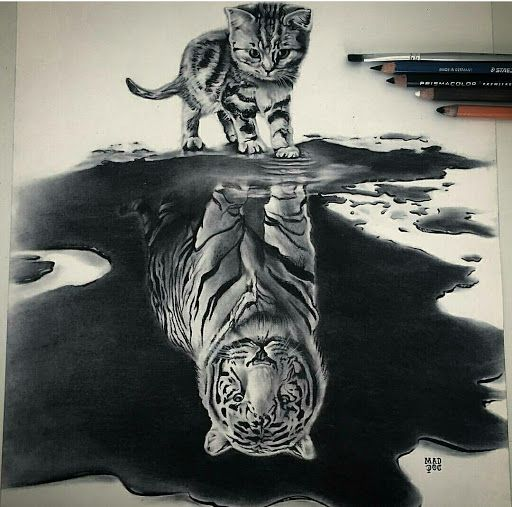 Amazing Drawings: Kitten-Tiger Reflection