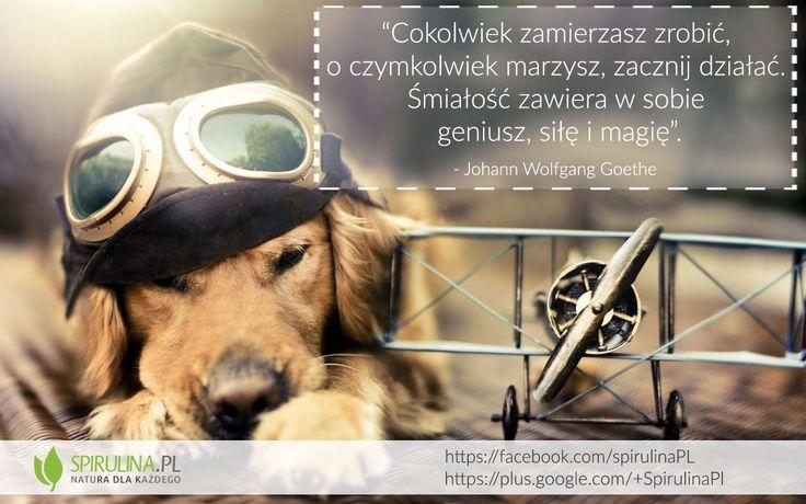 Jeśli zamierzasz coś zrobić, zacznij działać. Marzenia się spełniają, ale trzeba im pomóc. http://www.spirulina.pl/ #cytaty #zdrowie #motywacja