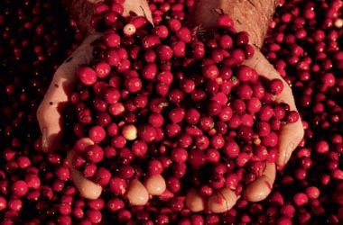 Cranberry Strawberry Rhubarb Dessert
