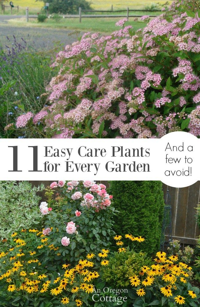 63 best for the garden images on pinterest craft for Easy to care for flowers outdoor